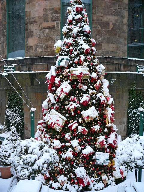 beautifully decorated christmas tree at restaurant on rose street edinburgh - Beautifully Decorated Christmas Tree Images